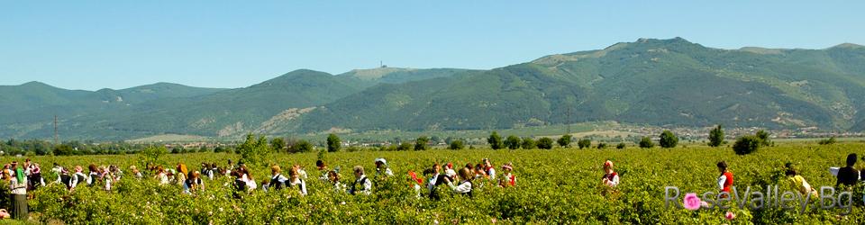 rose-valley-front-001.jpg